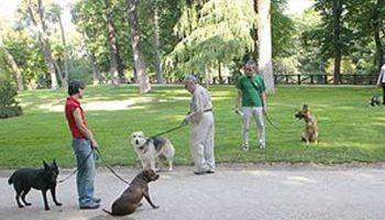 El Ayuntamiento de Elche multa a 102 dueños de perros por no recoger los excrementos de sus mascotas